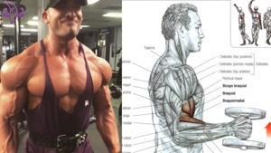 آموزش تمرین برای شانه ها ، جلو بازو و قفسه سینه