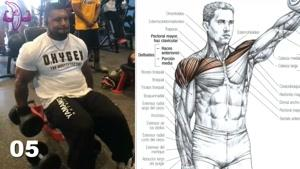 آموزش 13 تمرین برای عضلات سرشانه