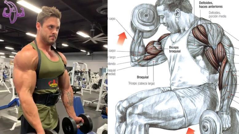 آموزش 7 تمرین برای جلو بازو و پشت بازو