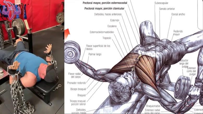 آموزش 7 تمرین بدنسازی برای قفسه سینه و بالا سینه قدرتمند