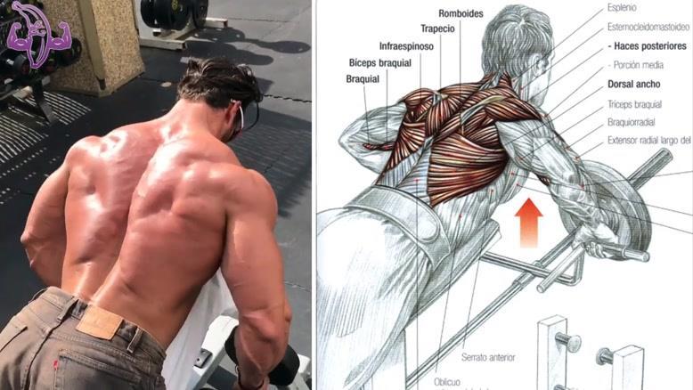 آموزش 9 تمرین برای تقویت عضلات پشت و کمر