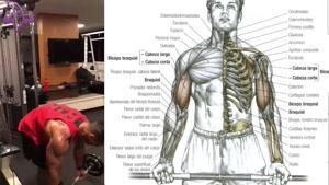 آموزش 8 تمرین برای شانه ، بازو و قفسه سینه
