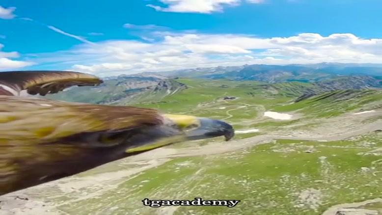 رشته کوه آلپ از نگاه یک عقاب.