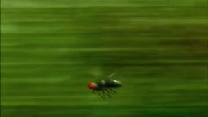 انیمیشن زندگی خصوصی حشرات فصل 1 قسمت هفتاد و هشت