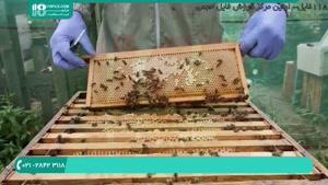 ویدیو آموزشی آماده سازی عسل