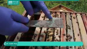 تجهیزات و ابزارهای زنبورداری