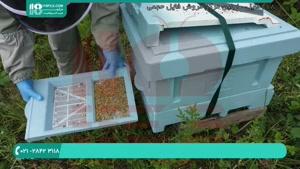 گرده گل یکی از پر مصرف ترین فراورده های زنبور عسل