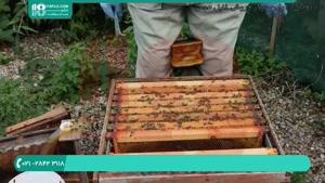روش های شناخت بیماری ها برای زنبورداران
