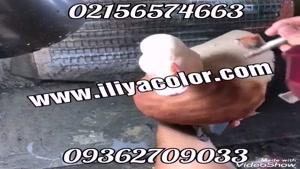 قیمت پودر مخمل ترک و ایرانی 09384086735