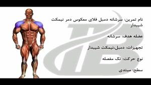 سرشانه دمبل فلای معکوس دمر نیمکت شیبدار