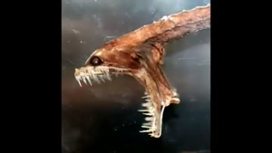 سایت دالفک موجودات عجیب و شگفت انگیز دریایی
