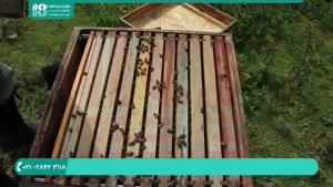 آموزش زنبورداری _ معرفی ابزار