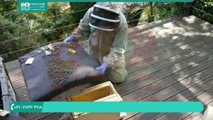 آموزش پرورش زنبور عسل در کمترین زمان