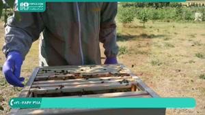 آموزش زنبورداری نوین در ایران - 118فایل|09130919448