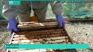 دانلود پکیج آموزش زنبورداری - 118فایل|www.118file.com