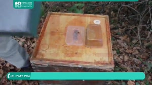آموزش زنبورداری مدرن _ 118فایل|09130919448
