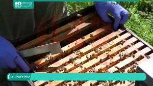 دوره آموزش صفر تا صد زنبورداری