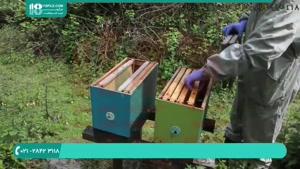 دانلود رایگان فیلم آموزش زنبورداری