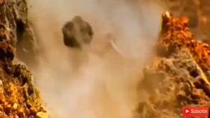 حمله پلنگ برفی به بز کوهی