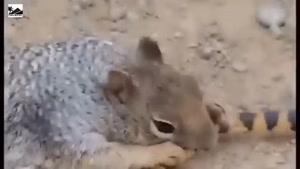 لحظات بسیار دیدنی از شکار حیوانات وحشی که توسط دوربینها ثبت شد