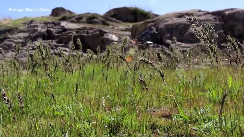 طبیعت زیبای جاغوری