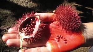 میوه ایی که با خوردن آن دیابت را تا %۷۰ کنترل می کنید