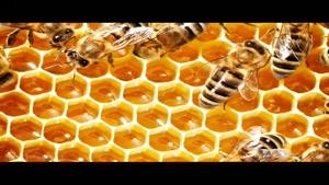 خريد عسل گياهي