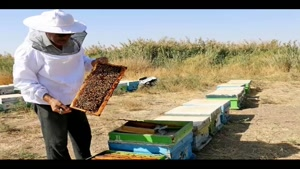 انواع عسل - عسل گون