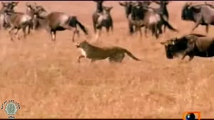مستند حیات وحش دوبله فارسی  این قسمت صحرای نامیبیا