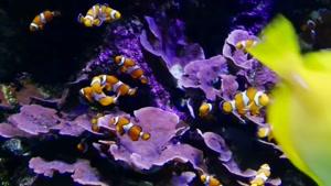 دنیای شگفت انگیز و زیبای حیات اقیانوس