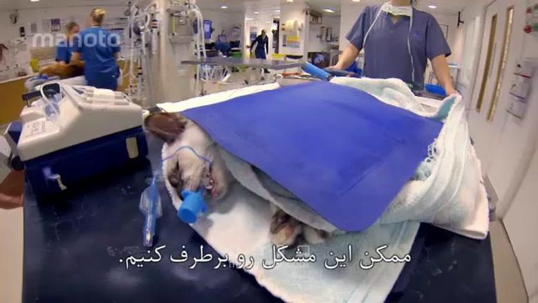 برنامه سوپر کلینیک حیوانات با زیر نویس فارسی قسمت یازده