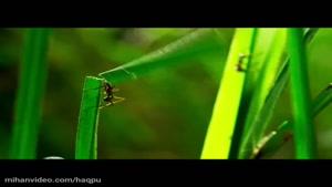 mihanvideo.com - زندگی مورچه ها