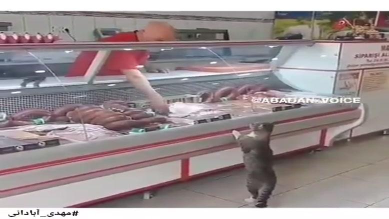 گربه ی آبادانی در صف گوشت!!