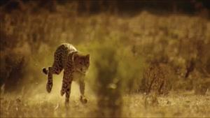 حیات وحش شگفت انگیز آفریقا