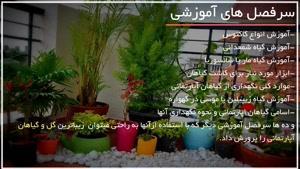 ۳ راز پرورش گل و گیاه زینتی داخل خونه