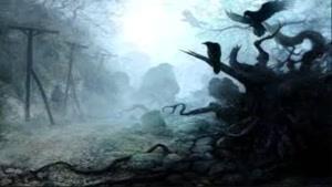 جنگل تاریکی