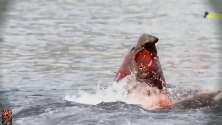 نبرد فیل دریایی