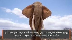 آخرین فیلم از ملکه فیل ها