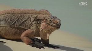 ویدیو زیبایی از حیات وحش