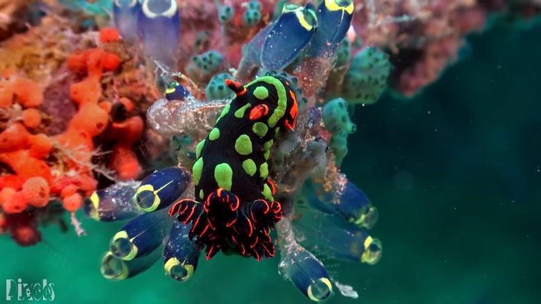 کلیپی زیبا از دنیای شگفت انگیز  زیر آب
