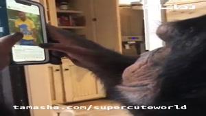تماشا - اینستاگرام چک کردن میمون