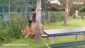 تماشا - حیوانات زیبا و ترسناک که اهلی شدند !؟