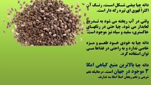 خاصیت دانه چیا برای لاغری