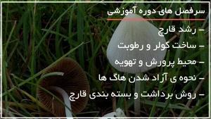 تولید آسان قارچ در خانه