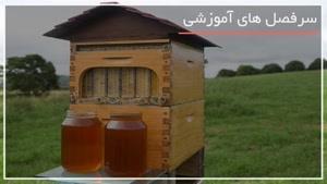 عظیم ترین و بزرگترین کندوهای عسل