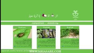 قارچ کش حرفه ای توت فرنگی گلخانه ای | لونا سنسیشن | Luna Sensation