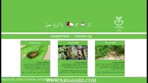 قارچ کش مخصوص غلات و دانه های روغنی با کیفیت بالا   Kestrel