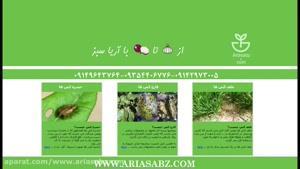قارچ کش مخصوص مزارع دانه های روغنی | کورینت | Corinth