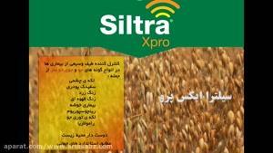 سیلترا ایکس پرو | Siltra xpro چاره ای مؤثربرای بیماری های جو