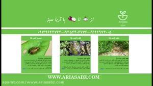 قارچ کش مزرعه غلات زمستانه و بهاره | فایرفلای ۱۵۵ | Firefly ۱۵۵